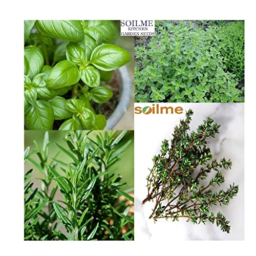 Rosemary Seeds Buy Rosemary Seeds Online At Best Prices In India