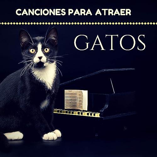 Canciones para Atraer Gatos - Música Relajante para Gato, Relajar Gatitos Bebés