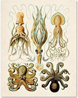 Octopi Illustrations - 11x14 Unframed Art Print - Makes a Great Beach House Wall Decor Under $15
