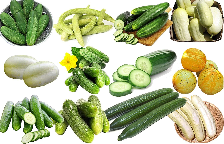 100+ Cucumber Mix Seeds 12 Varieties Non-GMO Delicious and Crisp