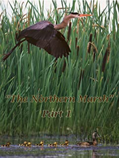 The Northern Marsh: Part 1