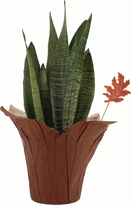 Shop Succulents Live Indoor House Grow Max 81% OFF Autumn 6