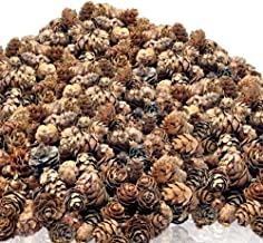 BANBERRY DESIGNS Natural Brown Pinecones - Approx. 3000 Pieces (4 lbs) of Assorted Sized Pine Cones - Christmas Potpourri ...