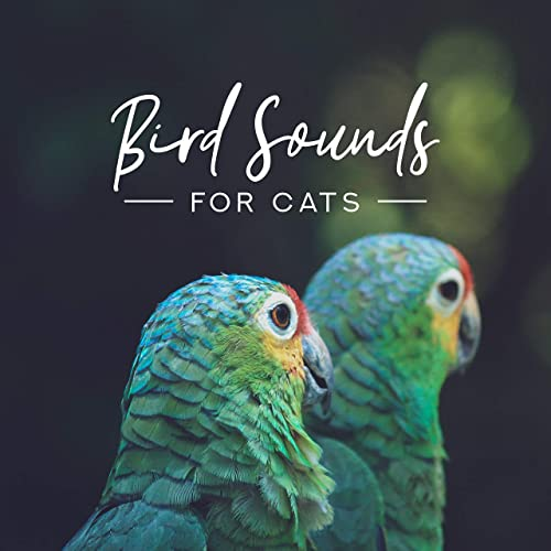 Bird Sounds for Cats: Sounds of Birds for Cat Relaxation