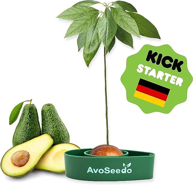 2513 opinioni per AvoSeedo Kit regalo da Giardinaggio per Avocado