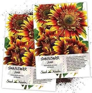 Seed Needs, Joker Sunflower (Helianthus annuus) Twin Pack of 45 Seeds Each