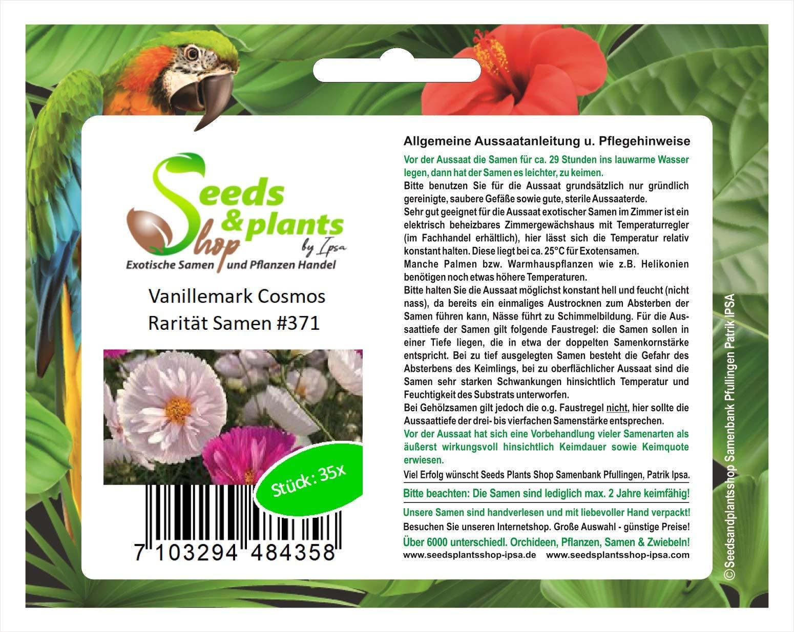 35 vainilla semillas de Cosmos semilla planta semillas de flores de jardín rareza #371: Amazon.es: Jardín