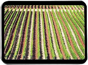 Lantern Press Oregon - Rows of Grape Vines A-9006235 (Keepsake Tin)