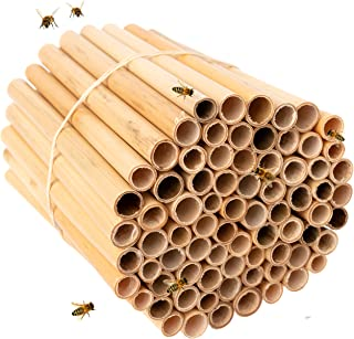 Rivajam Phragmite Reed Bee Nesting Tubes | 75 Piece Pack of Tubes | Beekeeper Pro Edition New Replacement Nesting Tubes | ...