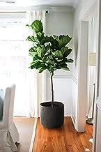 INDRESSME Black Cotton Rope Storage Basket - Woven Plants Basket Tree Basket Potted Plant Basket- Shoes Storage Bins Shelf Basket Home Decor Blanket Basket 15.8
