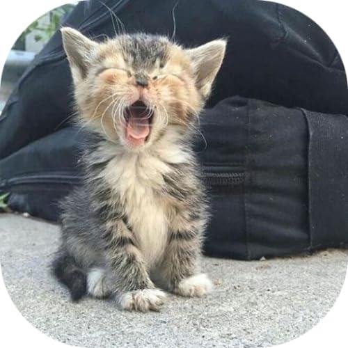 Kitten Keyboard