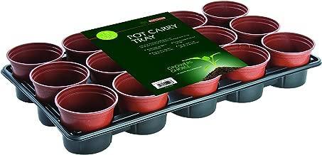 Secret Garden PLAT FIRM Germination Seeds: Staghorn Fern Platycerium Grande 2 Pot Live Plant PP058