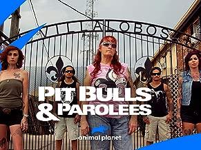 Pit Bulls and Parolees Season 14