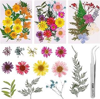 Metagio 61 Pièces Fleurs Séchées Naturelles Pressées Mélange Fleurs Séchées pour Bricolage Bougie Résine Nail Art Décorati...