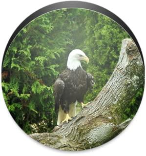 Bald Eagle Wallpaper Free