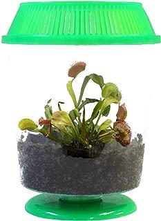 Adult Venus Flytrap in 4.5