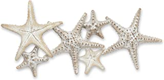 Abbott Collection 27-STARFISH-090 Starfish Family Wall Decor, 23 inches L, Beige