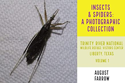 Insects & Arachnids: A Photographic Collection: Trinity River National Wildlife Refuge -  Visitors' Center: Liberty Texas - Volume 1 (Arthropods of Liberty Book 2) (English Edition)
