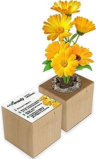 Eco-Woody | Regalo ecologico e sostenibile | Cubo di legno magnetico con semi di Calendula | Kit per la coltivazione facil...