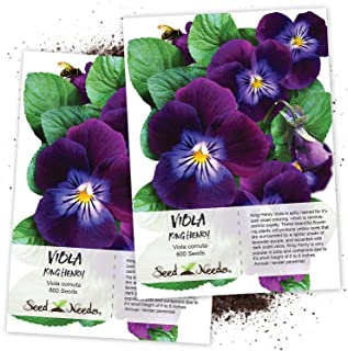 Seed Needs, King Henry Viola (Viola cornuta) Twin Pack of 600 Seeds Each