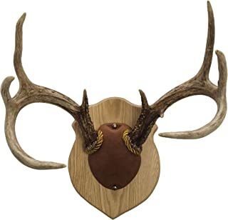Walnut Hollow Country Antler Mount & Display Kit, Oak