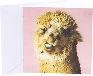 Hallmark Studio Ink Birthday Card (Alpaca)