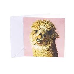 Hallmark Studio Ink Birthday Card (Alpaca)