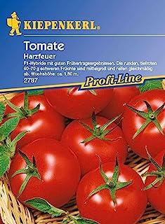 "Sämereien Tomate /""Harzfeuer F1/"" Samen Tomatensamen Stabtomate Saatgut 15 Pfla"