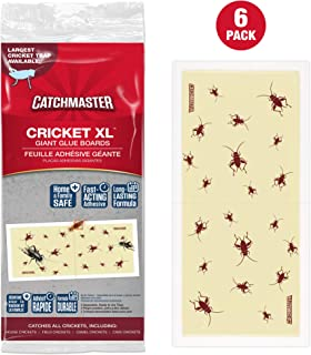 Best cricket insect painting Reviews