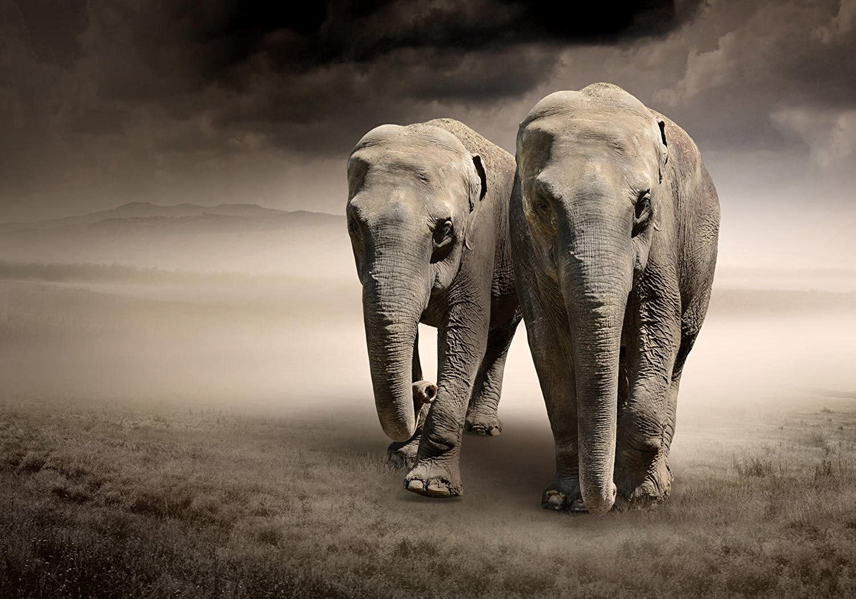 Vliestapete Elefantentraum Afrika Afrika Afrika 400cm x 280cm Fototapete Tapete - Wanddeko - Tapete - Wandbild - Fotogeschenk - Wand Dekoration B00ICKSM7S 4b3e44