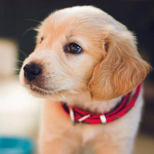 Fondo de pantalla de cachorros de bebé