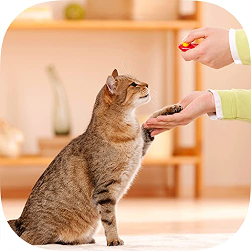 Best Cat Training Made Easy Guide & Tips for Beginners