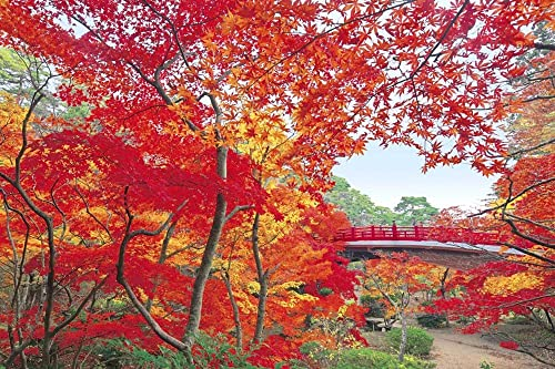 Aim master of the Puzzle (Japan landscape, autumn) Yahiko Park Maple Valley - Niigata (japan import)