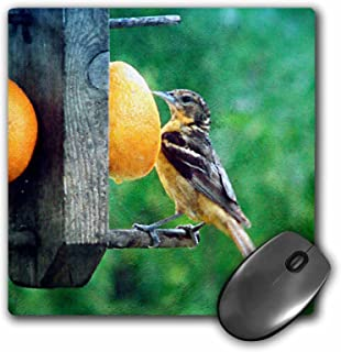 """3D Rose""""Oriole Female Bird At Feeder By Angelandspot"""" Matte Finish Mouse Pad - 8 x 8"""" - mp_130462_1"""