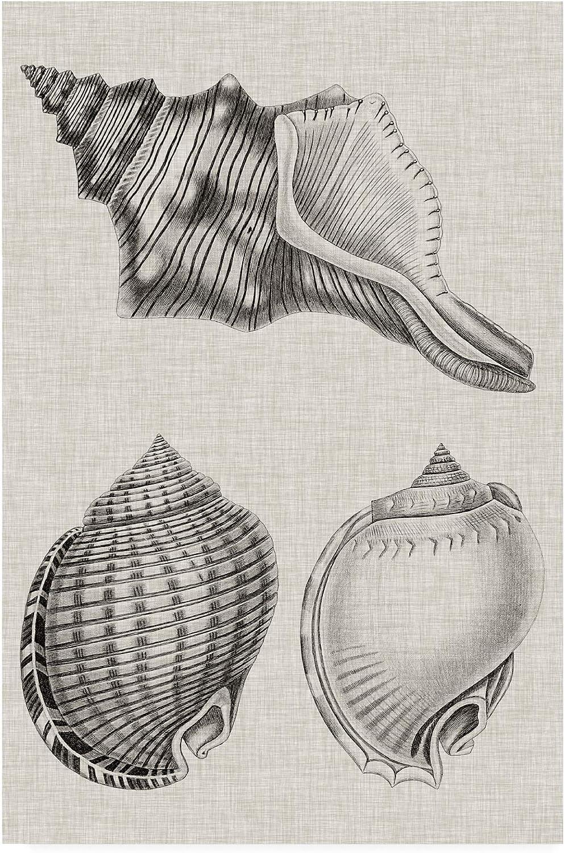 Trademark Fine Art Charcoal & Linen Shells V by Vision Studio, 12x19 19x12