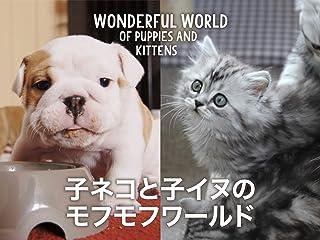 子ネコと子イヌのモフモフワールド(字幕版)