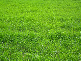 Nature`s Seed TURF-LOPE-500-F Perennial Ryegrass Seed Blend, 500 sq. ft
