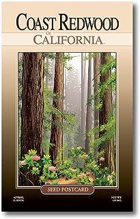 Best redwood tree seeds Reviews