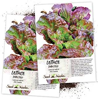 Seed Needs, Ruby Red Lettuce (Lactuca Sativa) Twin Pack of 400 Seeds Each Non-GMO