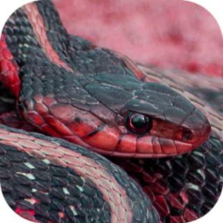Snake Vision Camera Effect