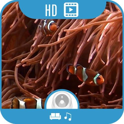 Clownfish Aquarium HD [5.1 Surround]