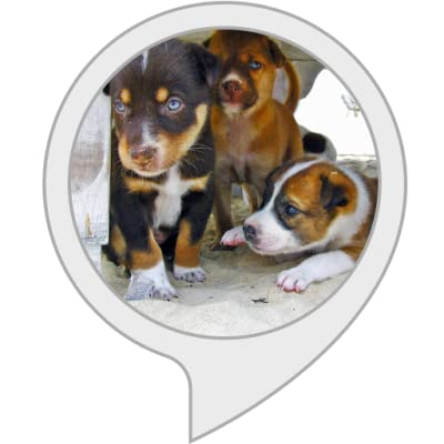 All About Dogs and Puppies by allsuper.info for Tina Winner