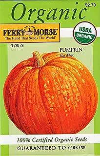Ferry Morse Organic Big Max Pumpkin Seeds