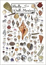 Best shells of the gulf of mexico Reviews