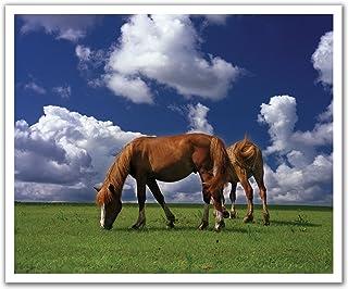 JP لندن poslt2201ustrip Lite قابلة للإزالة ملصق حائط من الفينيل ملصق جداري Horses على سادة grazing farmland Wild ، 60سم ...