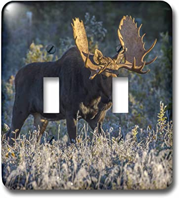 3drose Lsp 54974 2 Bull Moose In Early Morning Light And Frost In Riding Mountain National Park Manitoba Canada Toggle Switch Switch Plates Amazon Com