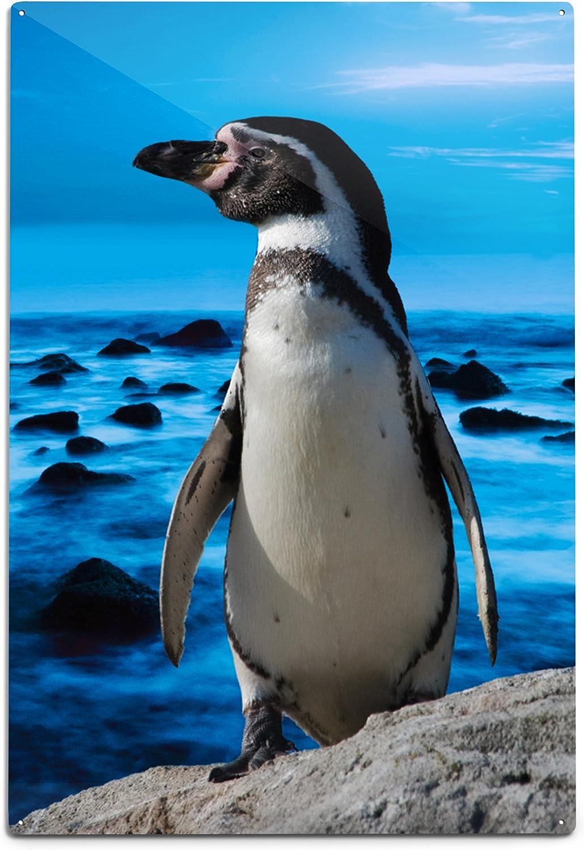 Lantern Press Penguins Max 55% OFF on Shore Aluminum Wall 12x18 Very popular! Sign