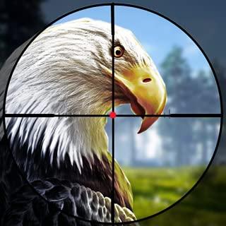 Birds Hunting Challenge 2019