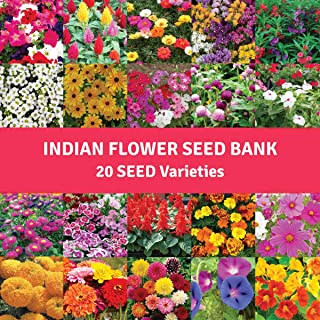 Pyramid Flower Seeds Bank For Home Garden 20 Varieties - 1300 Seeds