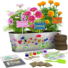 Dan&Darci Paint & Plant Flower Growing Kit - Grow Cosmos, Zinnia, Marigold Flowers : Includes Everything Needed to Paint &...